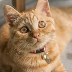 Donate Sofa In Nyc Aestivo 3pc Rattan Garden Set Brown Stone Orange Tabby Cat Laying On · Free Stock Photo
