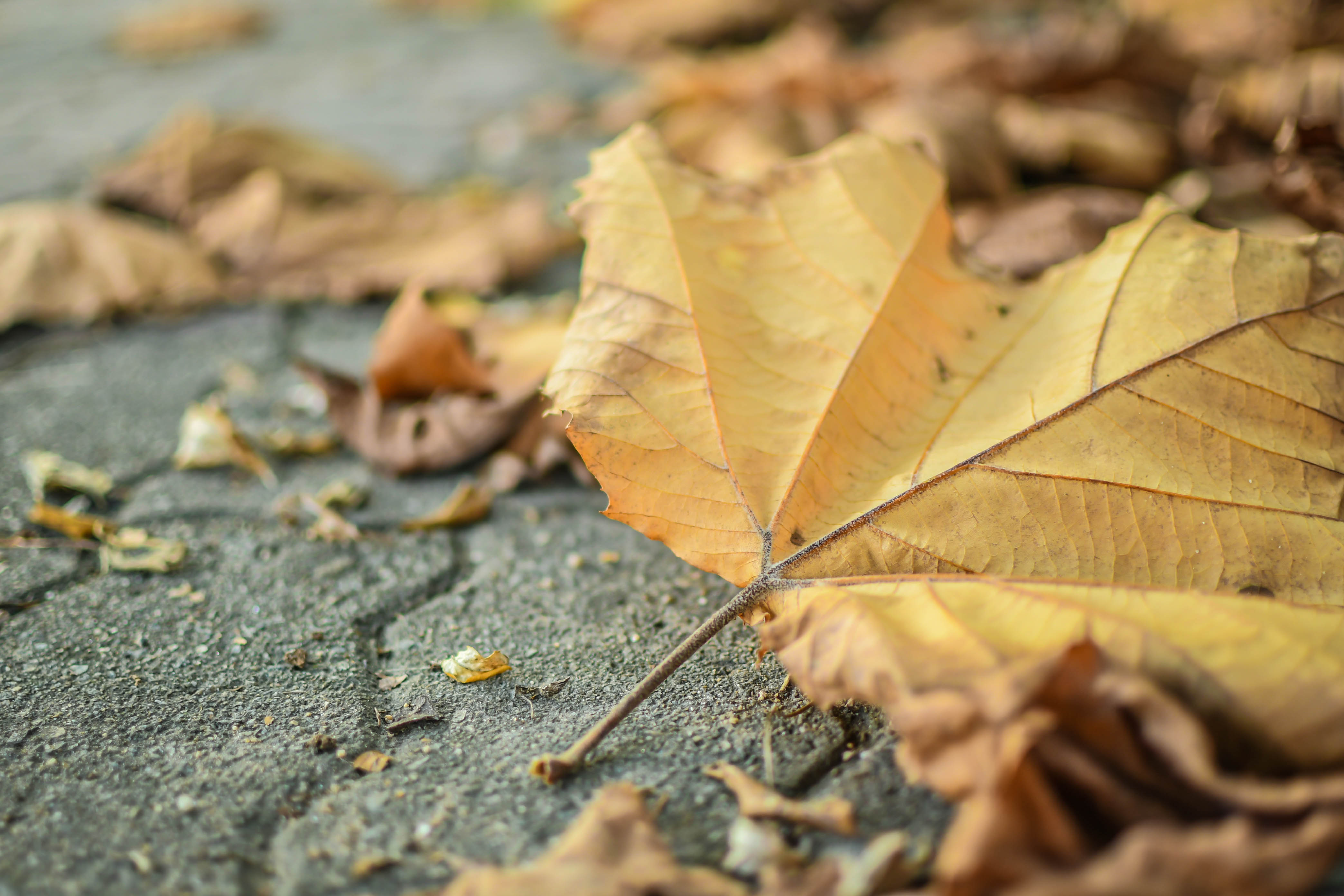 Fall Landscape Wallpapers Free Forest Ground With Branches And Foliage 183 Free Stock Photo
