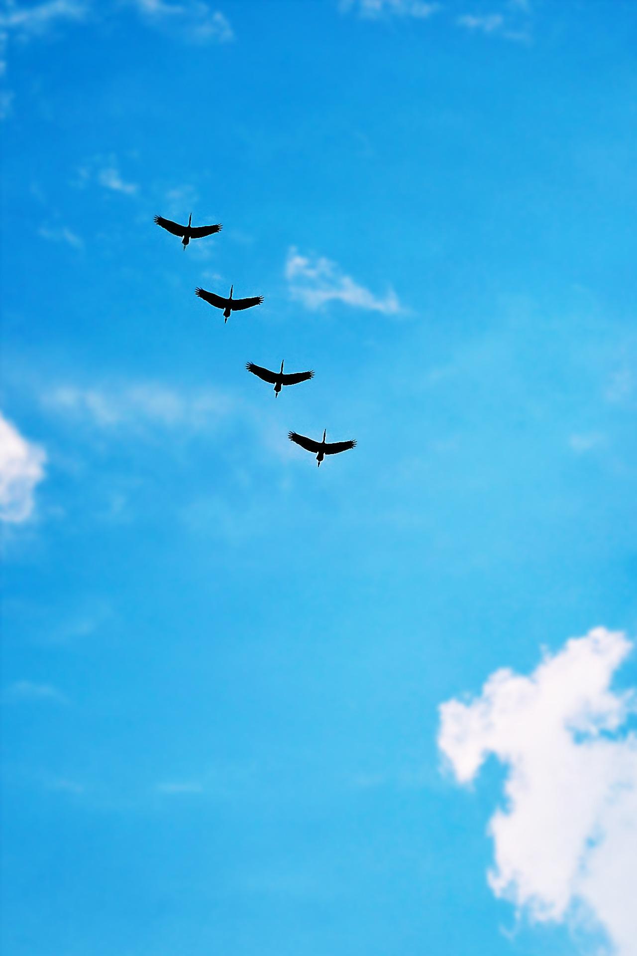 Black Bird Under Blue Calm Sky during Daytime  Free Stock