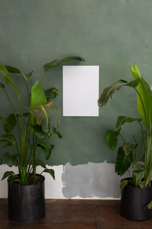 white rectangle between two large potted plants