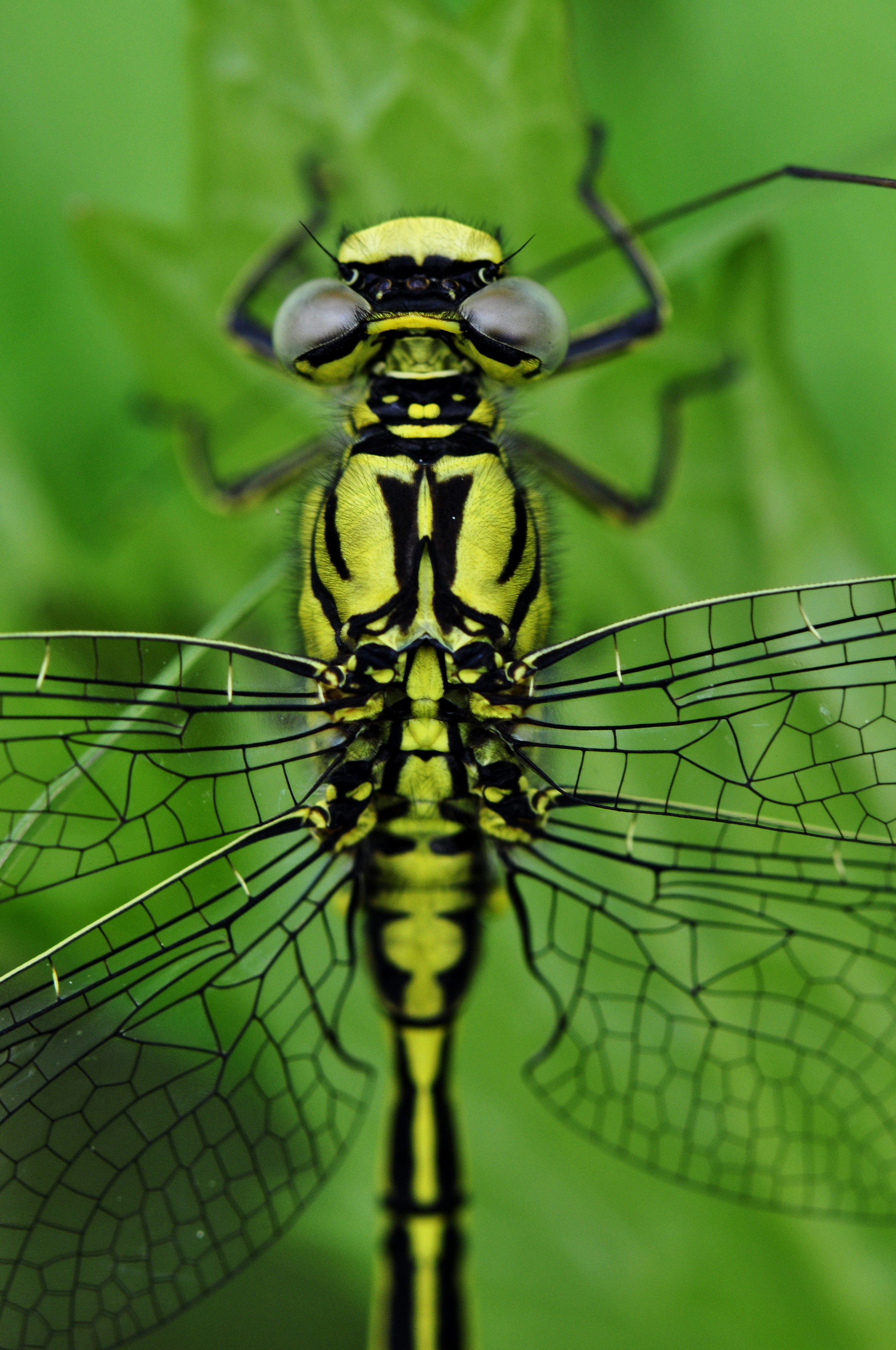 How To Change Lock Screen Wallpaper Iphone Free Stock Photo Of Close Dragonfly Wing Insect