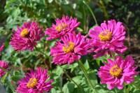 Free stock photo of autumn, flower, garden