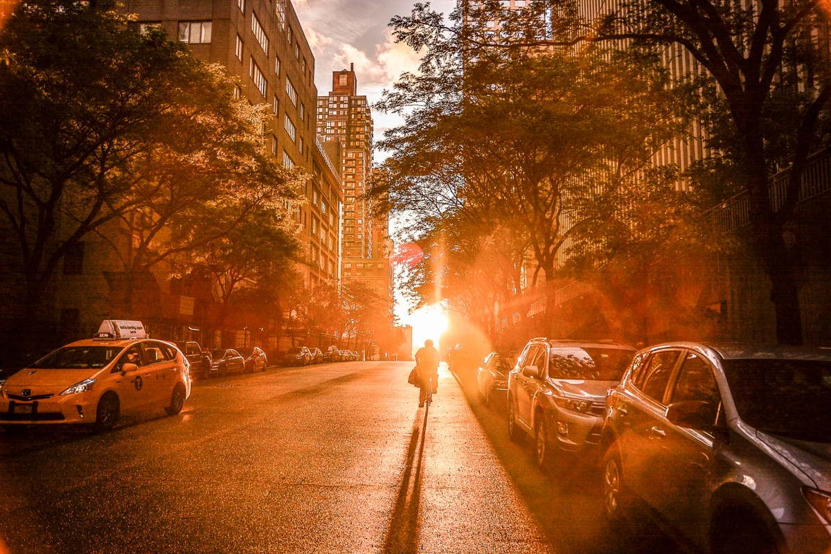 Buildings Surrounded by Trees