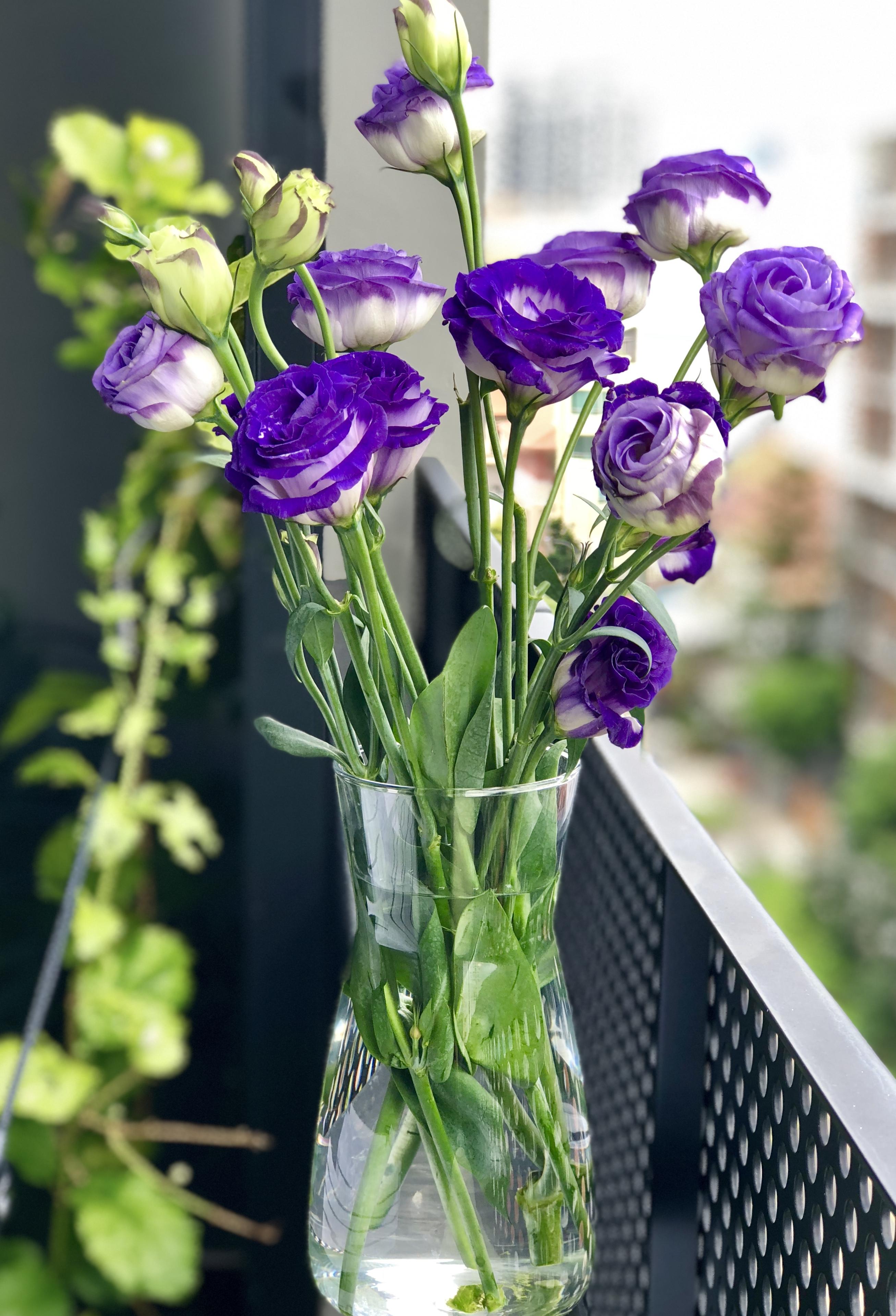 1000 Beautiful Beautiful Flowers Photos 183 Pexels 183 Free