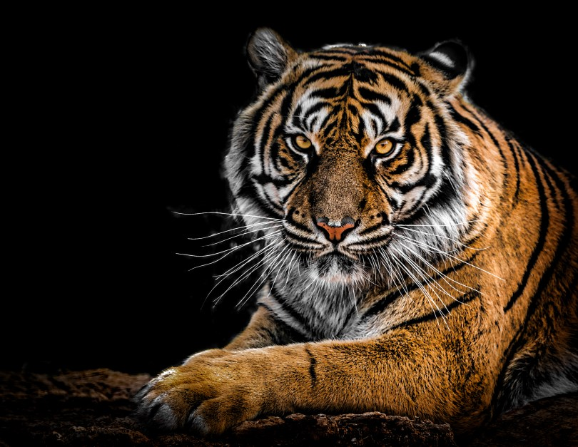 Last of big cats in zoo at centre of Tiger King controversy removed after court announcement about seizure of animals