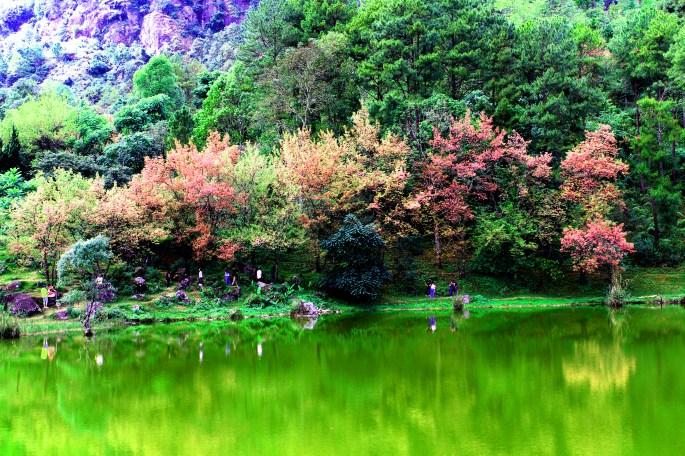 Green Grassy Field Landscape Photography