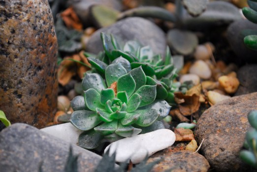 Green Succulent Plant on Clear Glass Jar on Top of Brown