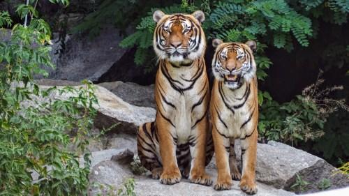1000 great wild animals