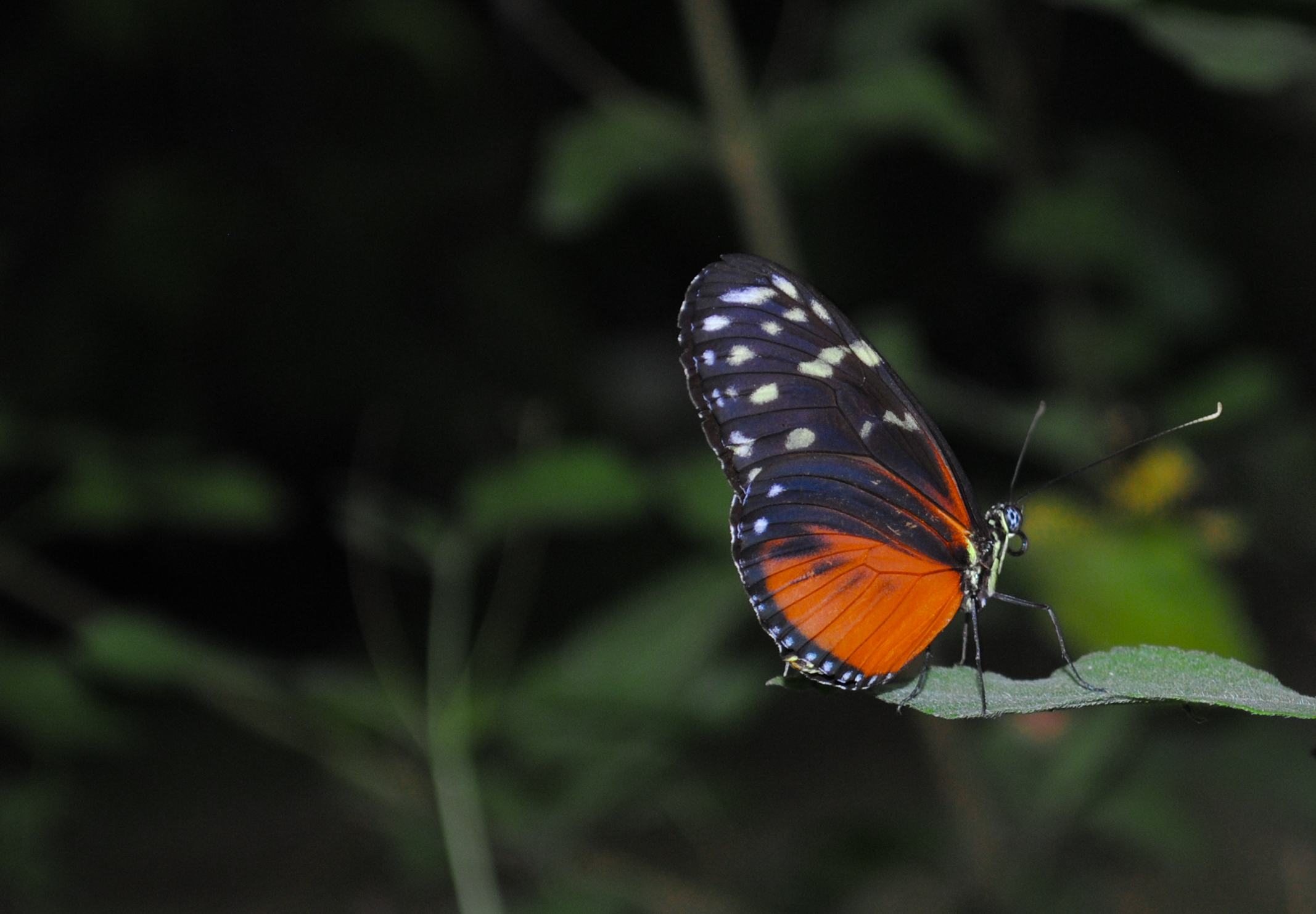 Orange Color Wallpaper Hd Black And Orange Butterfly Photo 183 Free Stock Photo