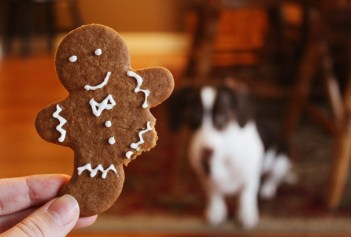 ginger snap for dogs