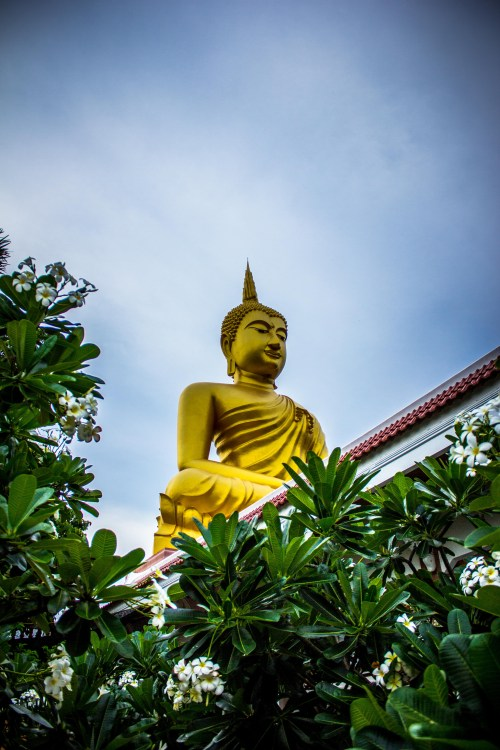 100 amazing buddha photos