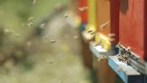 free bee videos pexels