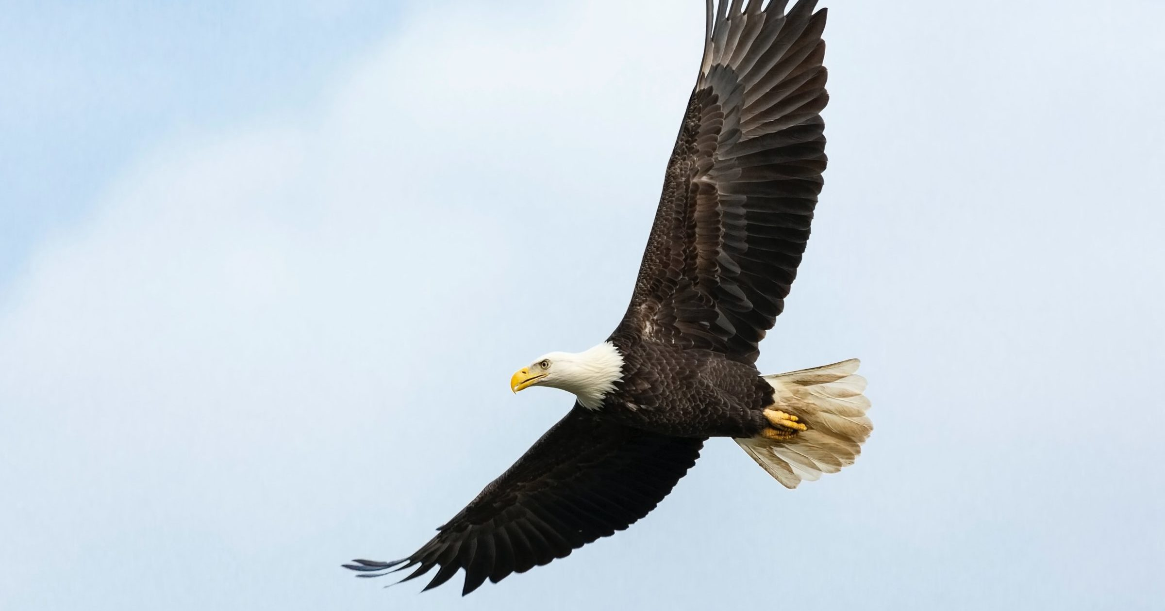 Where to spot bald eagles in Lebanon County