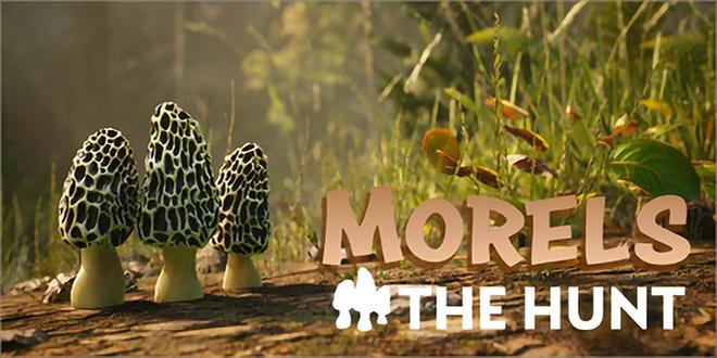 Morels: The Hunt