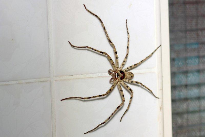 丁丁辰 says 我室友竟然寧願養蟑螂也不要喇牙 喇牙不是比較好嗎 會吃蚊子耶 - #ev2a32 - Plurk