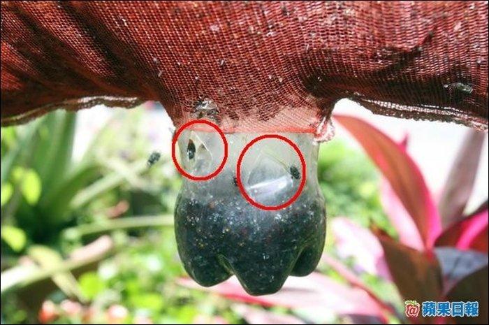 自製捕蚊(蠅)器 — 正名臺灣