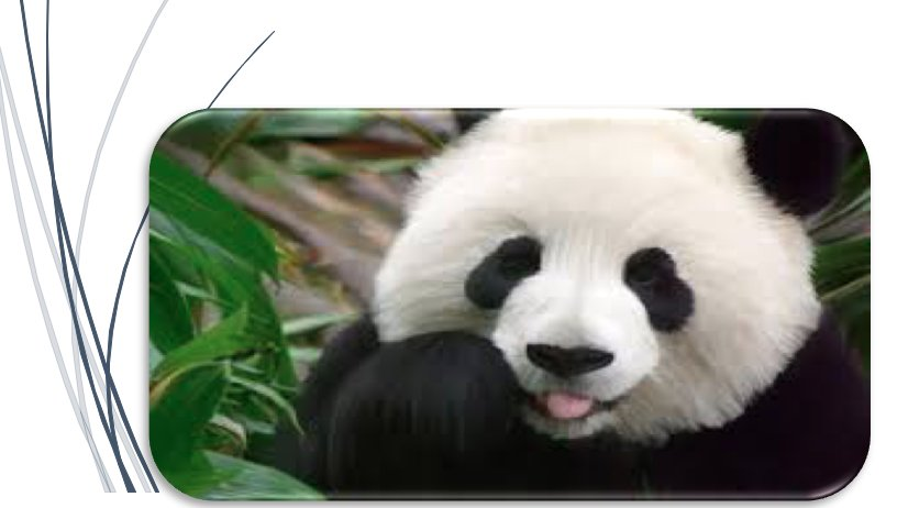 EVOLUSI PANDA