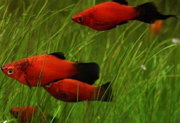 fishgod9999 分享 黑尾紅太陽 http://i0.wp.com/images.plurk.com/5749636_52ffae62b5dc178534fb6151b75dd3ae.jpg - #491qny - Plurk