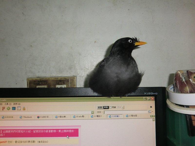 Re: [問題] 小鳥坐著是生病了還是只是在休息呢? - 看板 Aves - 批踢踢實業坊