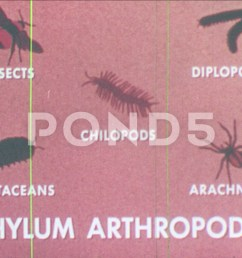 1960s diagram of phylum arthropoda diagram of diplopod millipede crawls on footage 81926038 [ 1920 x 1080 Pixel ]