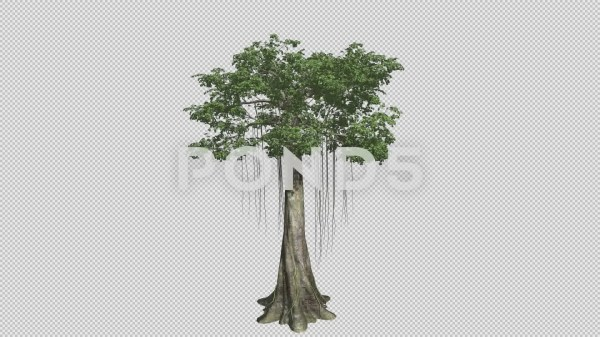 20 Kapok Tree Clip Art Pictures And Ideas On Meta Networks