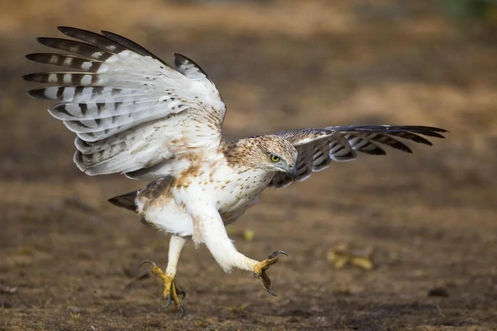 我想。有一天我們會飛:我們都嚮往小鳥的自由自在。但還未飛得起前。先看小鳥的可愛自在神情吧! | PopLady