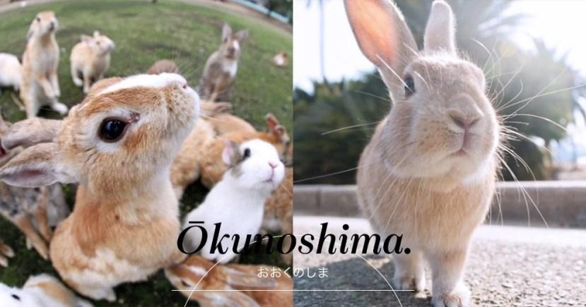 超萌的地方:日本廣島縣大久野島-兔子島。可愛小兔子讓你捨不得離開!   PopLady