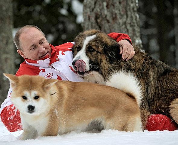 Президент В.В. Путин Akita Inu итімен