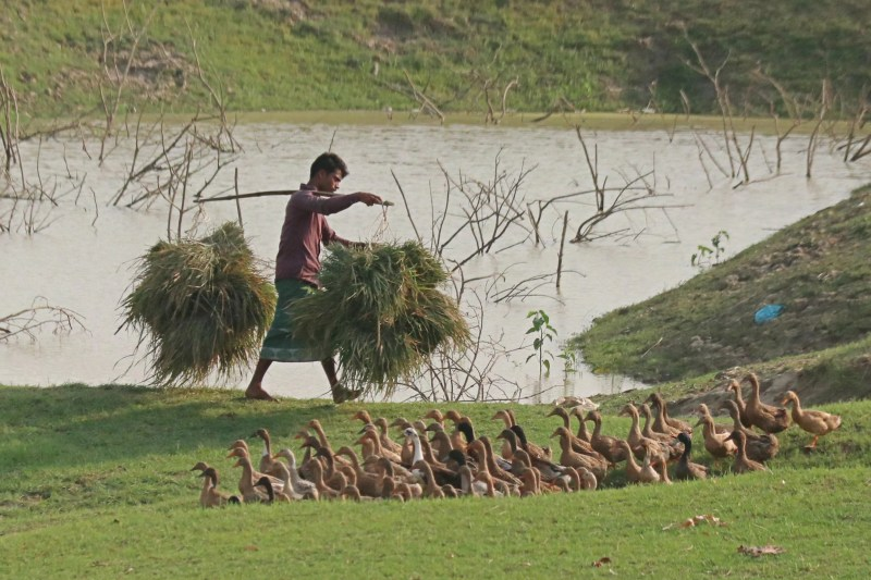 বোরোয় 'হিট শক' এবং জলবায়ু পরিবর্তনজনিত বৈরী পরিবেশে উৎপাদনে চ্যালেঞ্জ মোকাবিলায় করণীয়
