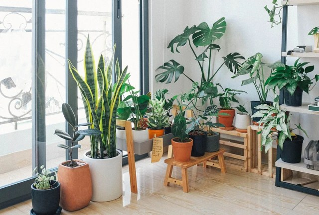 In interior decoration, plants not only enhance the decoration, but also protect the environment
