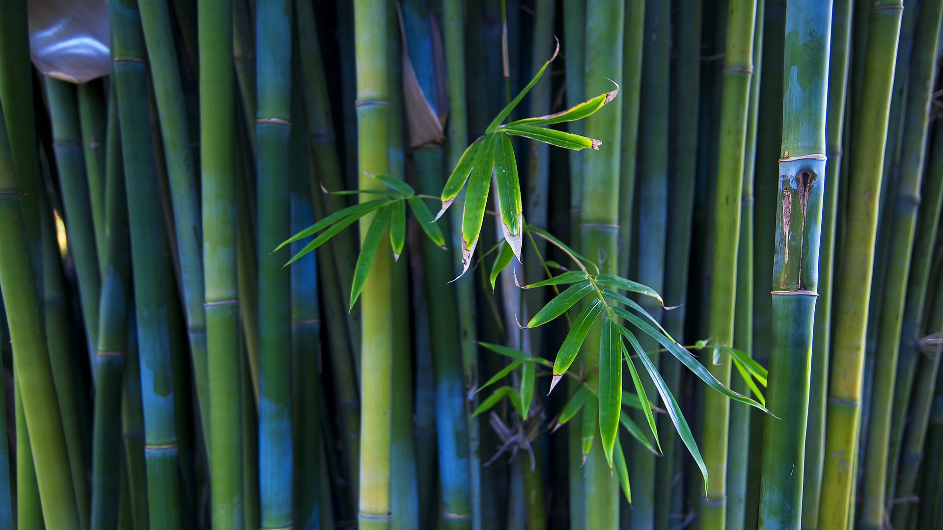 This is a Bamboo wallpaper. This Bamboo background can be used for your PS3