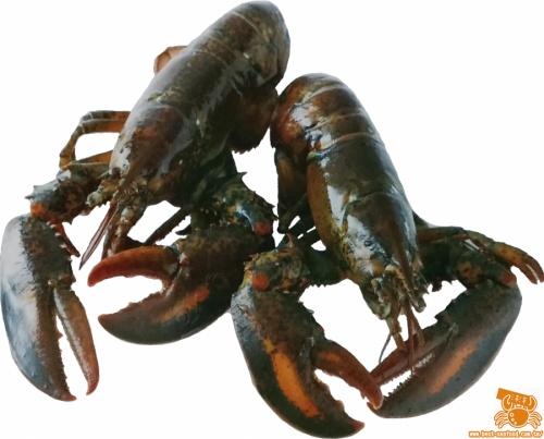 波士頓龍蝦 - 沛洋國際海鮮宅配網