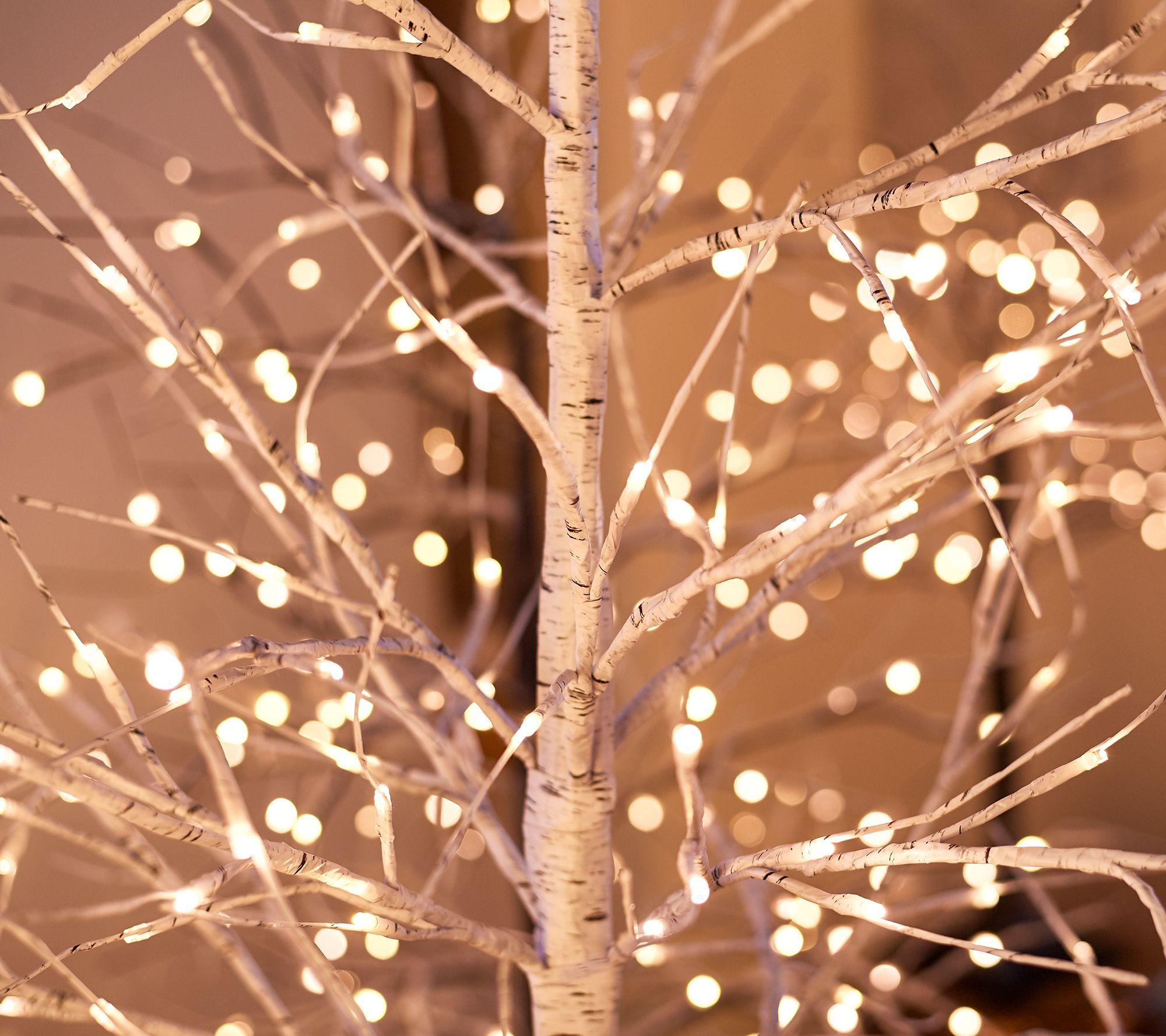 indoor outdoor birch tree