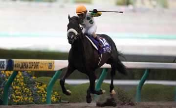 Nihonpiro Ours - Japan Cup Dirt (g1) - 02/12/2012