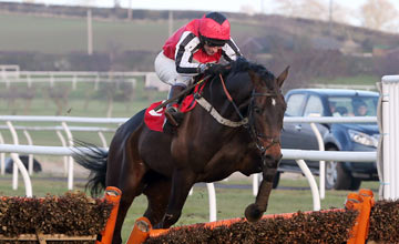 Image result for duke of navan horse
