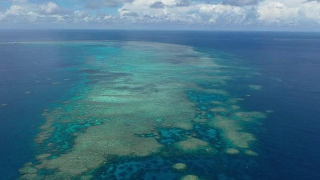 Le corail, victime parfaite du réchauffement planétaire