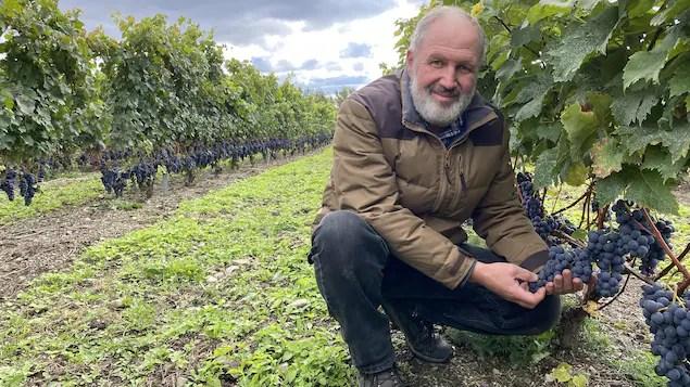 2020, une année fructueuse pour les vignerons du Québec