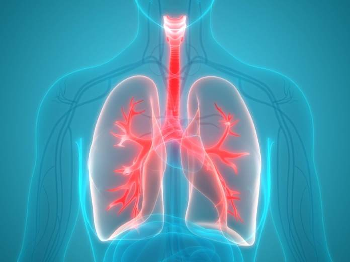 Illustration of the human respiratory system.