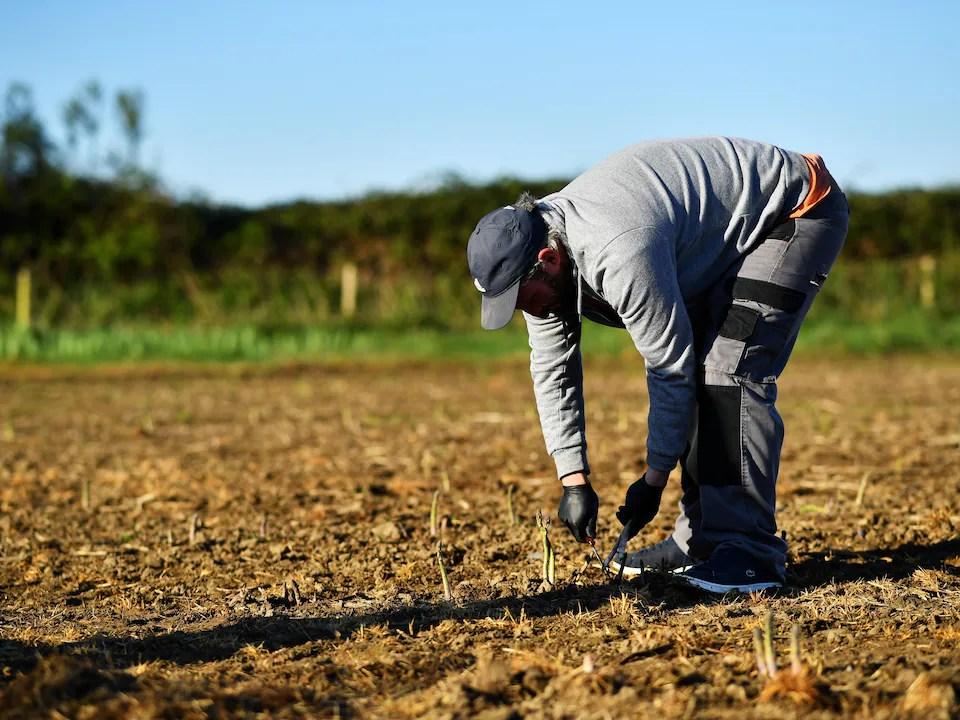Un homme penché sur une pousse dans un champ.