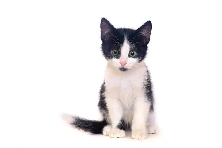 kitten makes full recovery