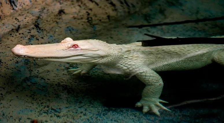 photos rare albino animals