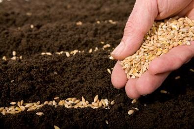Image result for reaping and sowing