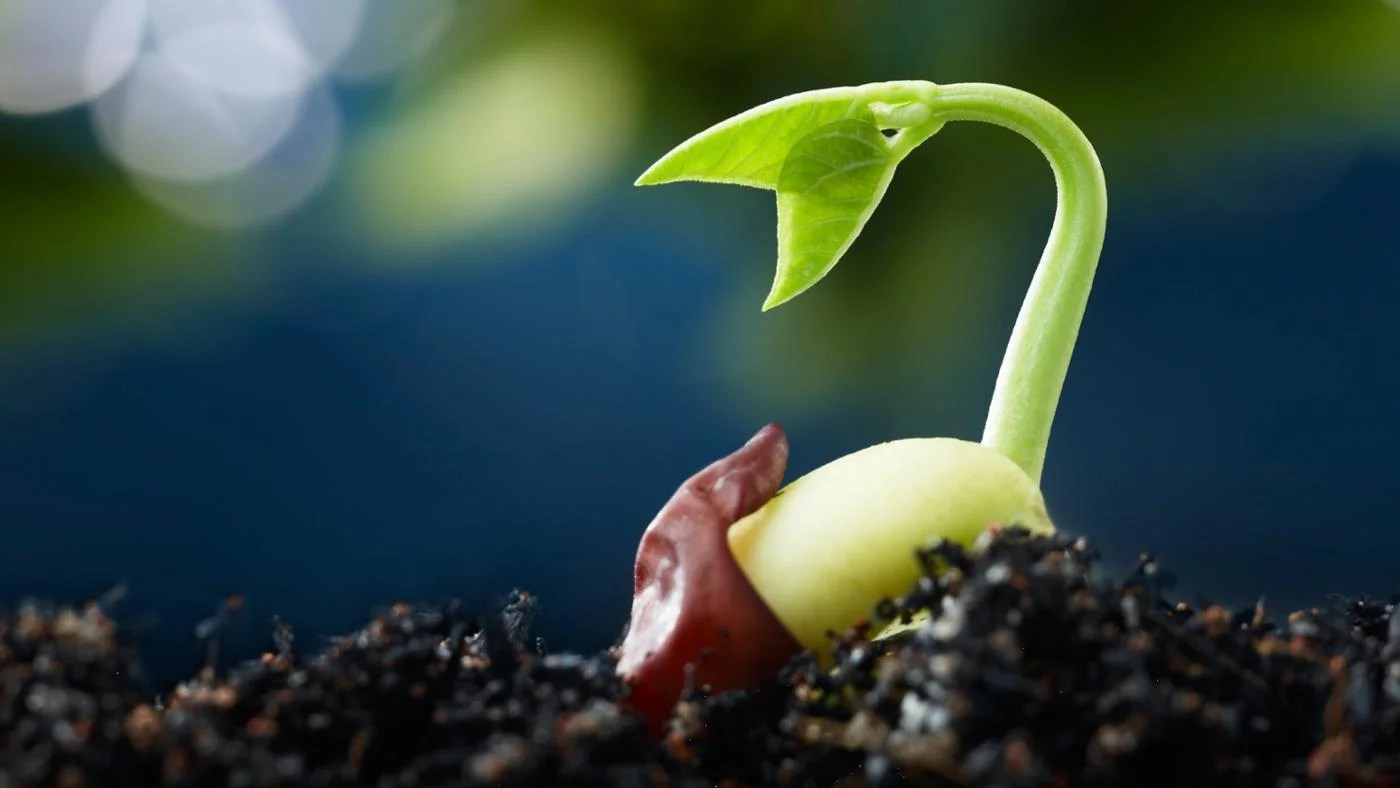 What Are The Five Stages Of Seed Germination