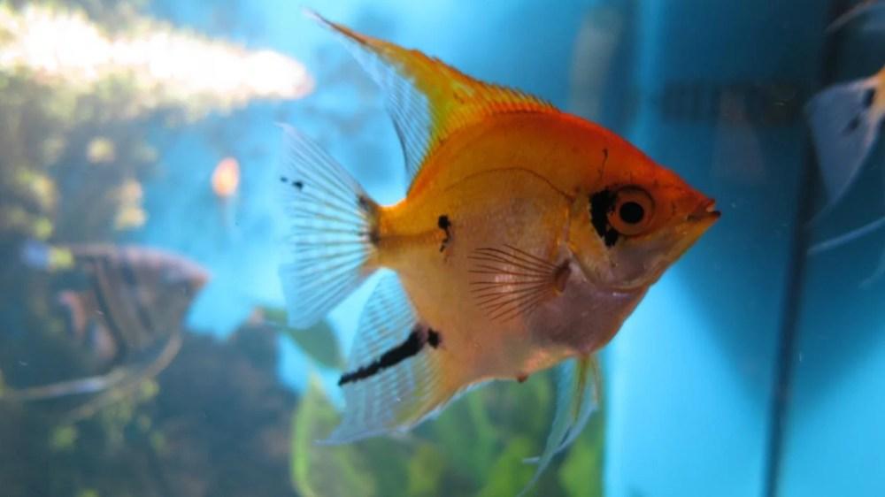 medium resolution of how do you install an undergravel filter system for your aquarium