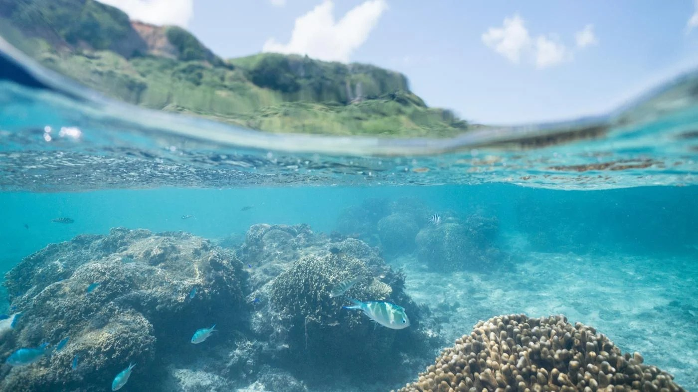 What Are Some Facts About Ocean Ecosystems
