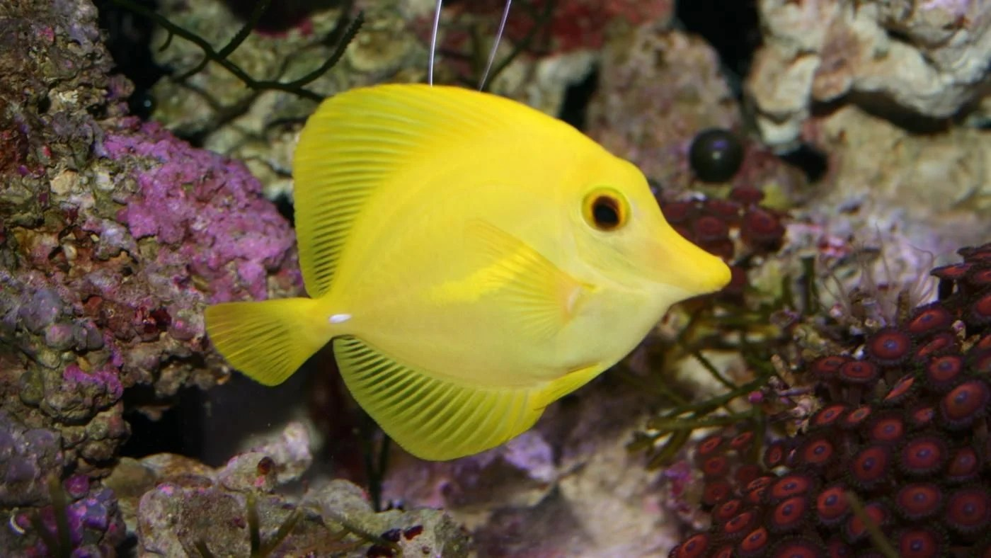 What Are Some Characteristics Of Fish