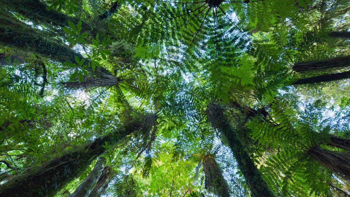 What Is An Example Of Mutualism In The Rainforest