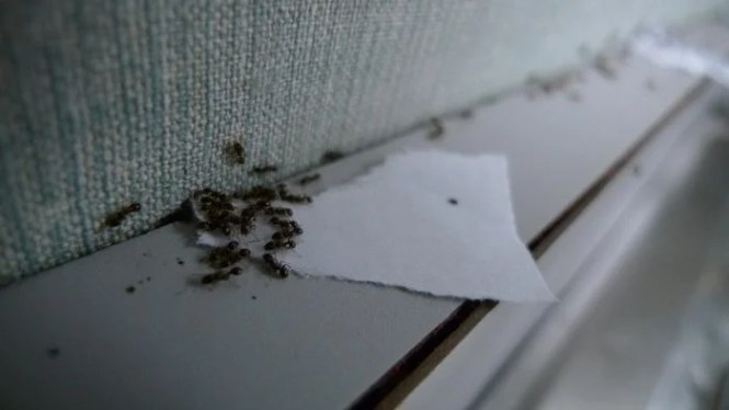 Enjoyable How To Get Rid Of Ants In The Garden 7 Natural Uses For Baking Soda