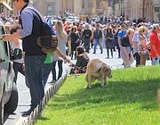Il cane la fa nell'aiuola di piazza di Spagna (Jpeg)
