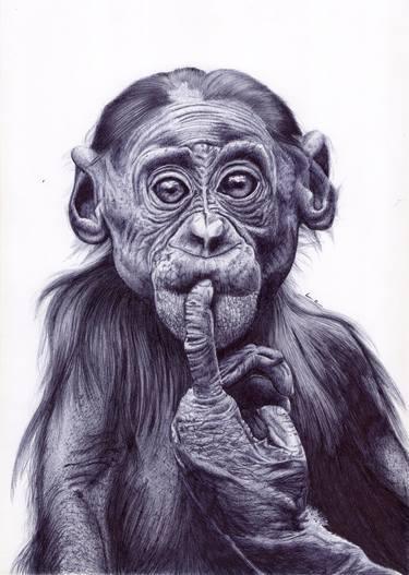 a curious chimpanzee